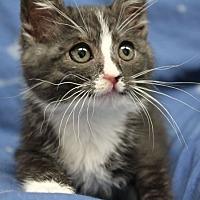 Adopt A Pet :: Beulah - Republic, WA