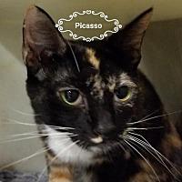 Adopt A Pet :: Picasso - Gautier, MS