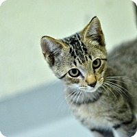 Adopt A Pet :: 10311735 - Brooksville, FL