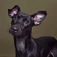 Adopt A Pet :: Harry - Sudbury, MA