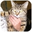 Photo 1 - Domestic Shorthair Cat for adoption in Somerset, Pennsylvania - Cool Bug