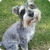 Adopt A Pet :: Buddy - North Benton, OH