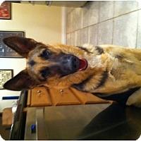 Adopt A Pet :: Spock - Rancho Cordova, CA