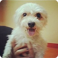 Adopt A Pet :: Robbie - Cathedral City, CA