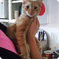 Adopt A Pet :: Frito - Chandler, AZ
