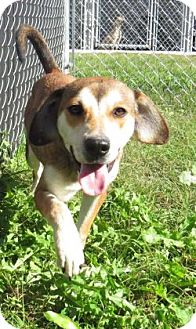 Beagle Mix Dog for adoption in Georgetown, South Carolina - Mary Lou