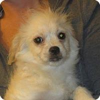 Adopt A Pet :: Peter - Salem, NH