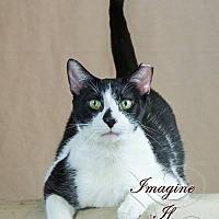 Adopt A Pet :: Ozymandias - Edmond, OK