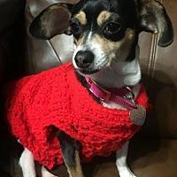 Adopt A Pet :: Chica 2 - San Antonio, TX