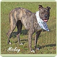 Adopt A Pet :: Micki - Hillsboro, TX