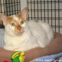 Adopt A Pet :: Tiki - Neenah, WI