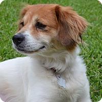 Adopt A Pet :: DAISY - Boston, MA