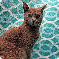 Adopt A Pet :: 17-c06-006 Opal - Fayetteville, TN