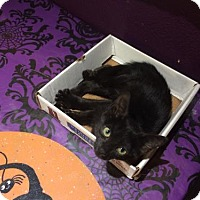 Adopt A Pet :: Daezee - Glendale, AZ