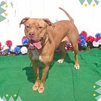 Adopt A Pet :: HONEY - Marietta, GA