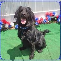 Adopt A Pet :: TYSON - Marietta, GA