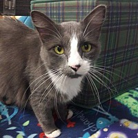 Adopt A Pet :: Kennedy - Leonardtown, MD