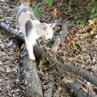 Adopt A Pet :: Moguley - Newburgh, IN
