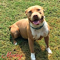 Adopt A Pet :: MACEY  PLEASE READ - Cushing, OK