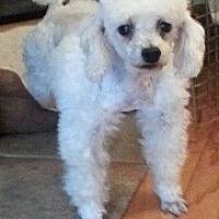 Adopt A Pet :: Misty - Alexandria, KY