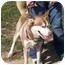 Photo 2 - Siberian Husky Dog for adoption in Somerset, Pennsylvania - Sammy