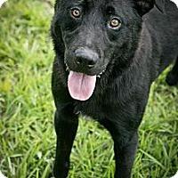 Adopt A Pet :: Chomper - Jackson, MS