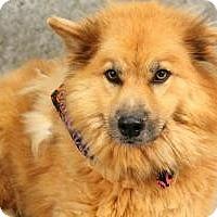 Adopt A Pet :: Sweet boy Barry - Baltimore, MD