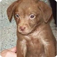 Adopt A Pet :: ALF       (Adoption Pending) - Southport, NC