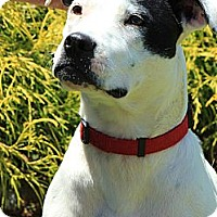 Adopt A Pet :: Janey Faye - Reisterstown, MD