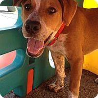 Adopt A Pet :: Griffin - Richmond, VA