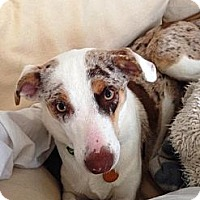 Adopt A Pet :: Ellie - PENDING, in Maine - kennebunkport, ME