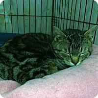 Adopt A Pet :: Kiwi - Byron Center, MI