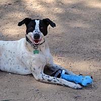 Adopt A Pet :: Mac - Bonsall, CA