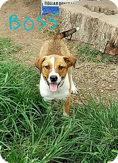 Border Collie/Terrier (Unknown Type, Medium) Mix Dog for adoption in Lawrenceburg, Tennessee - Boss