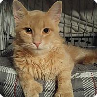 Adopt A Pet :: Ranger - Lenhartsville, PA