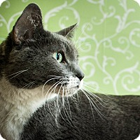 Adopt A Pet :: Bugs - Red Wing, MN
