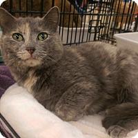Adopt A Pet :: Sweetheart - Bridgeton, MO