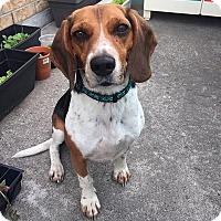 Adopt A Pet :: Tim - Hamilton, ON