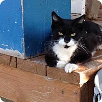 Adopt A Pet :: Livy - Spanish Fork, UT