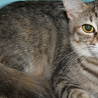 Adopt A Pet :: Milo - Cuero, TX