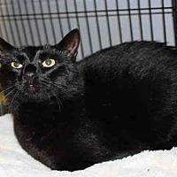 Adopt A Pet :: JACK - Hampton Bays, NY