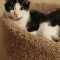 Adopt A Pet :: Angus - Mesa, AZ