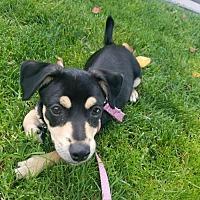 Adopt A Pet :: Thumper - Los Angeles, CA