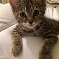 Adopt A Pet :: Ella - Burbank, CA