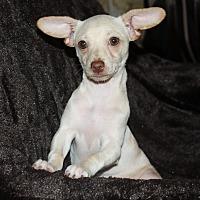 Adopt A Pet :: Coconut - Henderson, NV