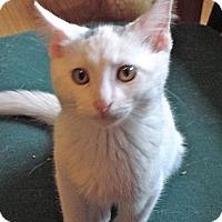 Adopt A Pet :: Felipe - Escondido, CA