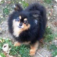 Adopt A Pet :: Brandi - Orange, CA