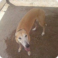 Adopt A Pet :: Maggie - Cottonwood, AZ