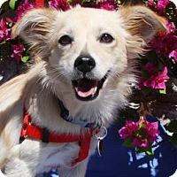 Adopt A Pet :: Keeley - Gilbert, AZ