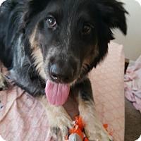 Adopt A Pet :: Dutchie - Scottsdale, AZ